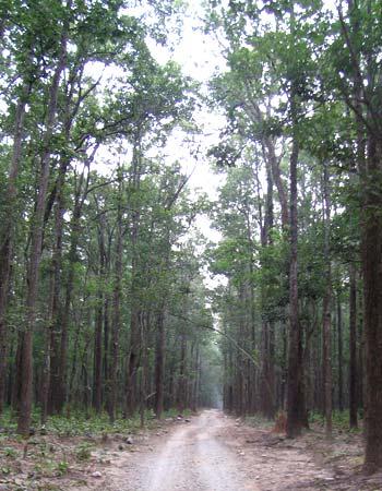 The dense expanse of the Sitabani jungle