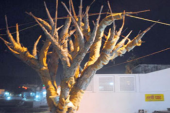 Sacred tree at Tarni Ghat. Pushkar is one of the 5 sacred dhams in India.