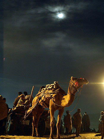 A camel cart ride