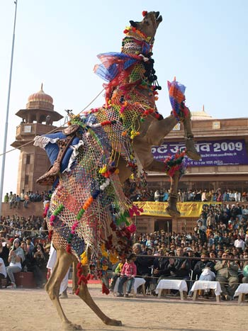 Camel dance and acrobatics competition