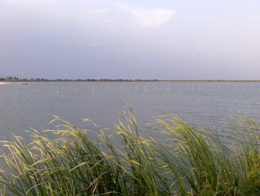 Kolleru, Andhra Pradesh