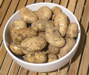 Potatoes contain large amounts of potassium