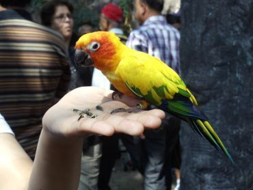 A bird in the hand...