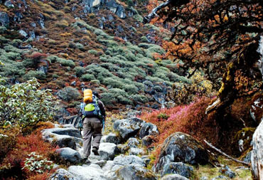 A trail on the Goecha La trek, Sikkim
