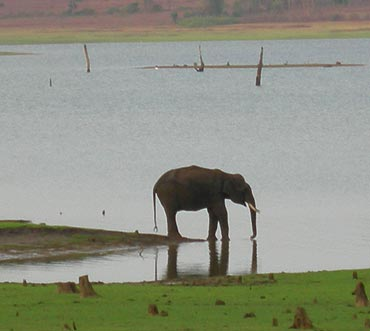 Kabini Wildlife Sanctuary, Karnataka