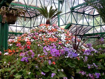 The flower show at the Botanical Gardens in Ooty is a major tourist attraction.