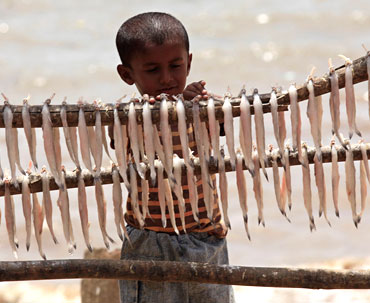 The child of a fisherman stands next to fish being dried on a beach in Mumbai.