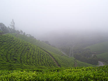 Munnar hills