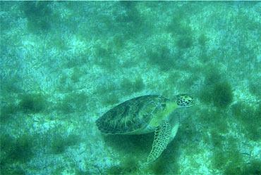 Lakshadweep's underwater life
