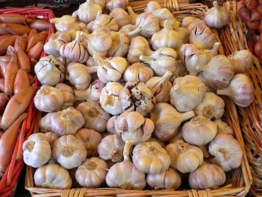 Garlic can inhibit coronary artery calcification