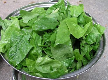 The potassium and folic acid in spinach prevent high BP