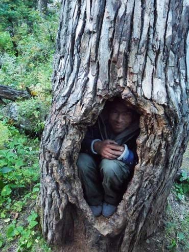Guide Rajneesh Singh Chauhan shows a spot that bears like to hibernate in.