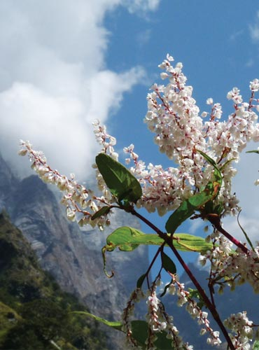 Wildflowers abound in the 'Other Valley of Flowers'