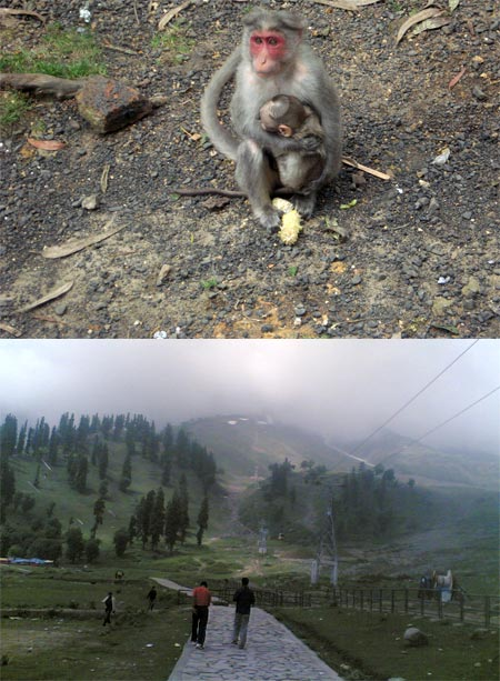 A collage of a monkey at Kodaikanal and misty Gulmarg evening