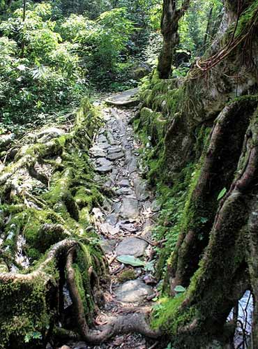 A small root bridge