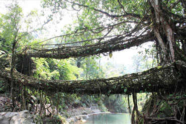 The Double Decker Living Root Bridge