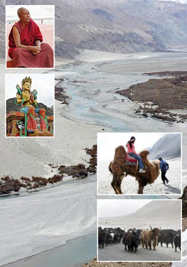 Travel: A camel ride on top of the world