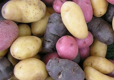 Foods such as potatoes have a high glycemic index