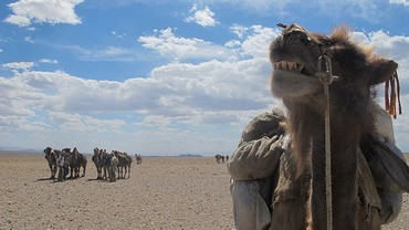 ' I could never be friends with the camels again'