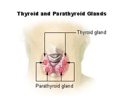 What is the best treatment for controlling thyroid problems?