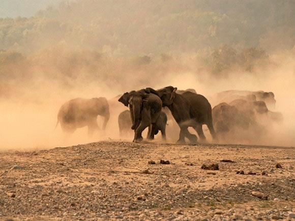 Elephantine Restraint