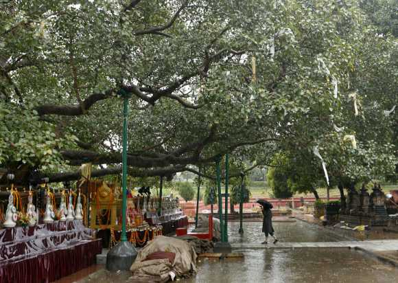 A pilgrim walks under Lord Buddha's holy tree at the Mahabodhi temple compound in the eastern Indian city of Bodh Gaya January 23, 2008. Tales of corruption, looting and religious rivalry are swirling around the spot where Buddha is said to have gained enlightenment in eastern India some 2,500 years ago, sullying one of Buddhism's holiest sites.
