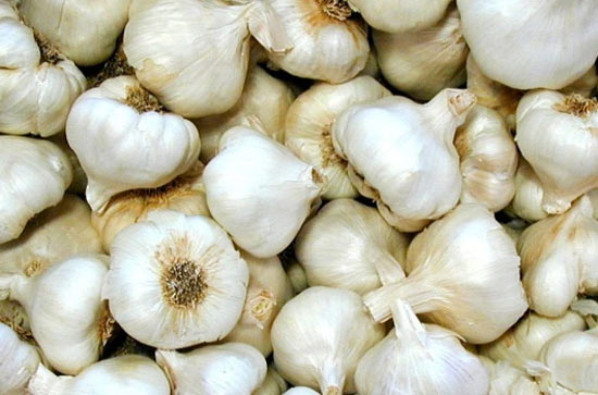 Top health benefits of garlic