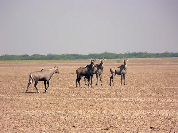 10. Kutch, Gujarat