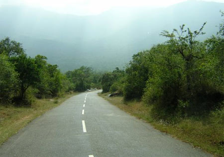 Masinagudi-Ooty Highway via Kalhatty.