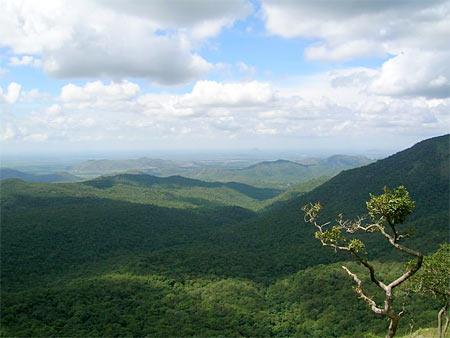 Mudumalai forest