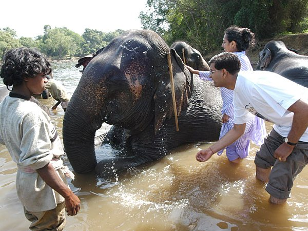 Bathing elephants in Karnataka
