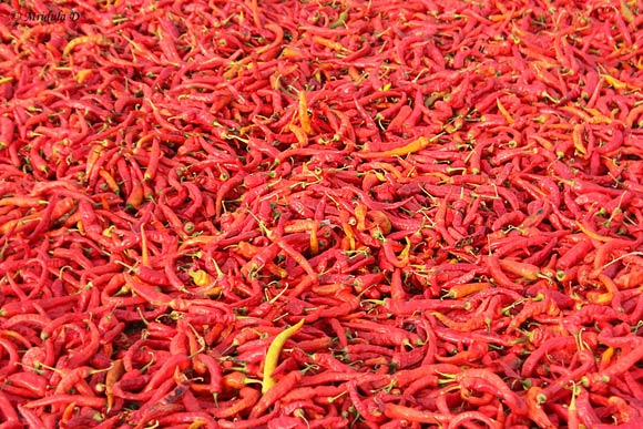 Red Chilies, Raipur Chilli Market, Rajasthan
