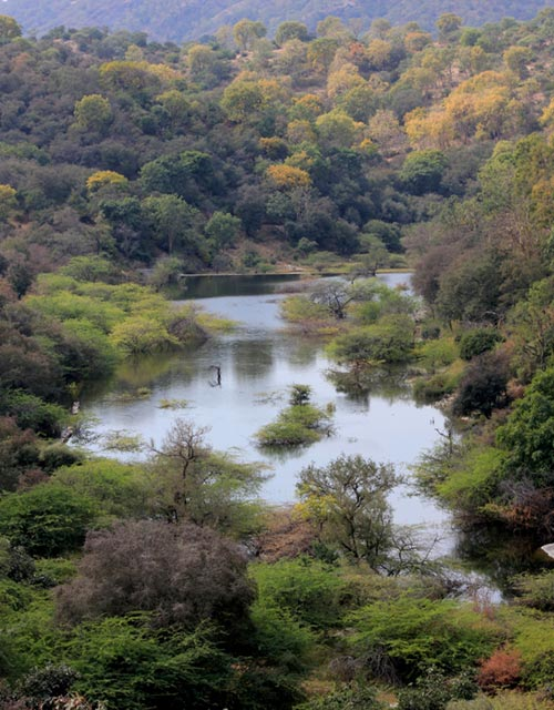 Fall colours at Rawli-Tatgarh Sanctuary
