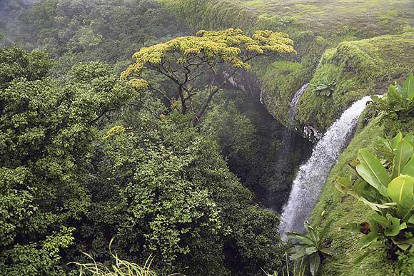 The Dodamarg forest waterflows
