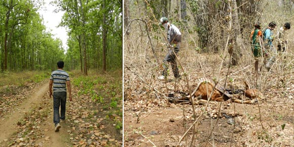 (Left) Govind taking a walk in the forest and (right) image of the killing