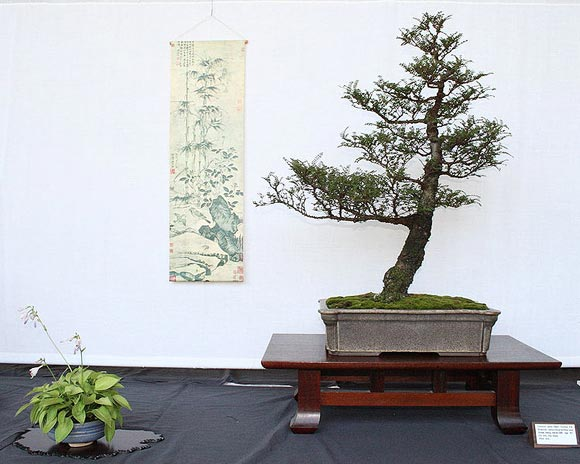 The I-shape Bonsai