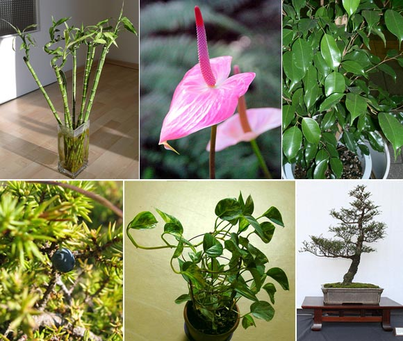IN PICS: Now, plants for your personality types!