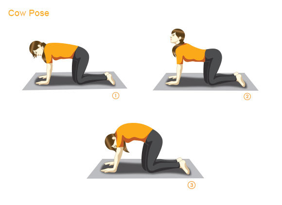 Bitilasana or Cow Pose