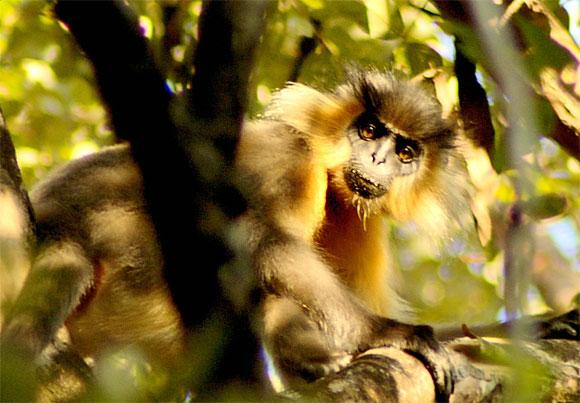 Manas National Park, Guwahati