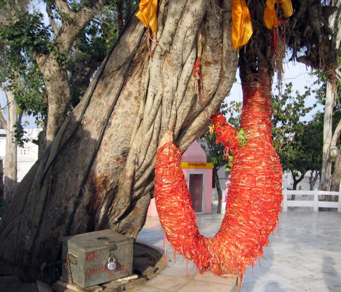 The banyan tree where Krishna is believed to have imparted teachings of the Bhagavat Gita to Arjun.