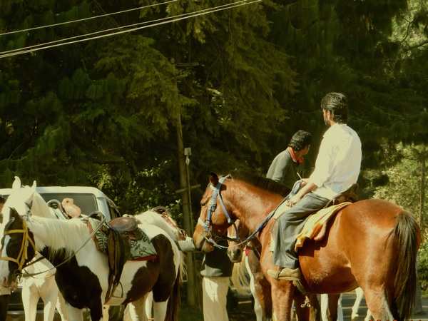 Horse-riding around Ooty Lake