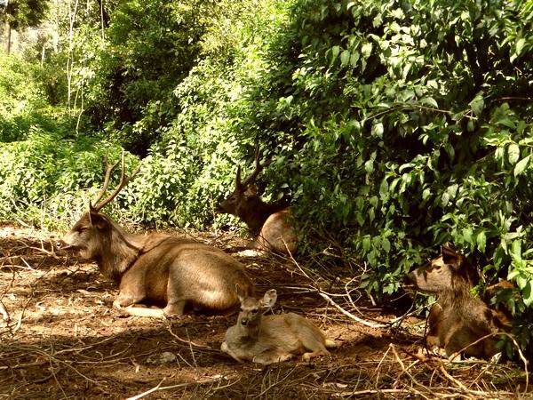 Deer Park, Ooty