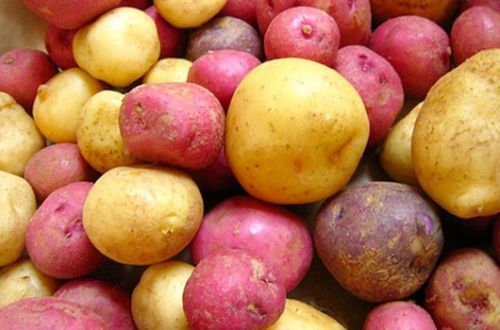 Potato talk: From health