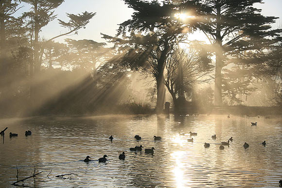 Golden Gate Park, San Francisco, Califo