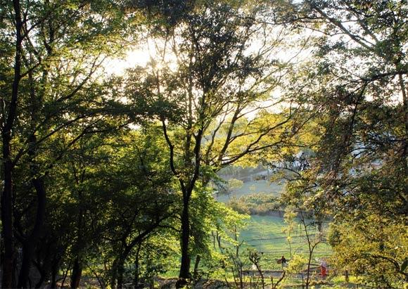Travel: Snapshots from Palampur