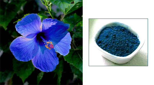 Use petals of blue hibiscus (left) to get blue colour