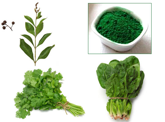 Leaves of coriander when crushed will give you green colour