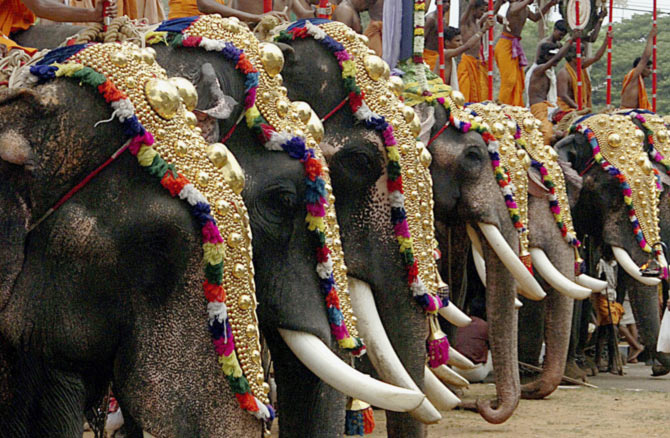 Decorated elephants take part in the Trichur Pooram festival in Trichoor, in the southern Indian state of Kerala