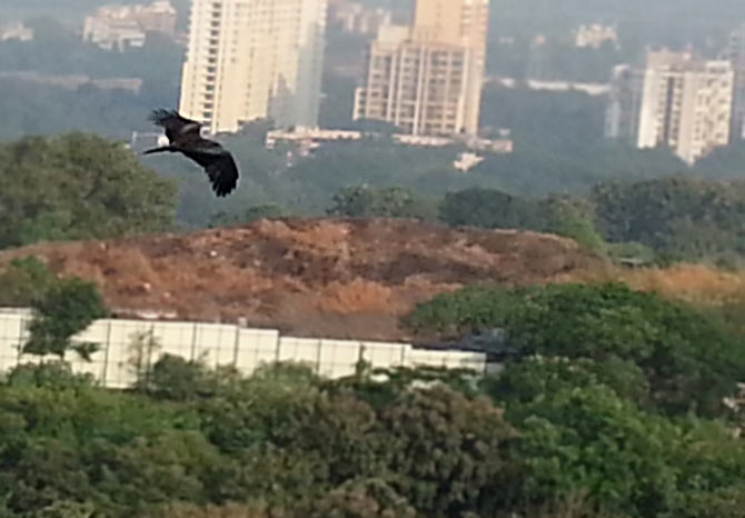 A black kite flies past the hills