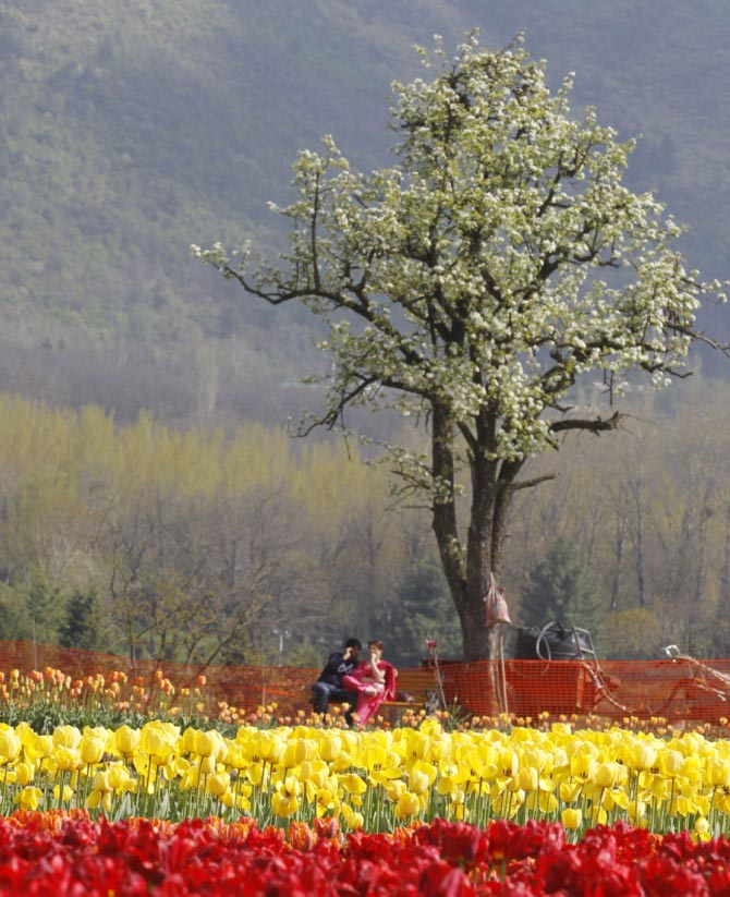 A couple rests on a bench inside Kashmir's tulip garden during Baisakhi festival in Srinagar April 13, 2011.